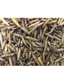 Dried calciworms (black soldier fly larvae)