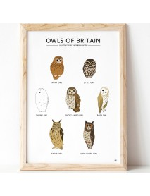 Owls of Britain print (unframed)